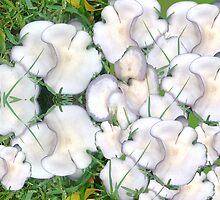 Mushroom Maddness by KazM