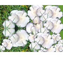Mushroom Maddness Photographic Print