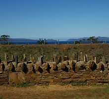 Old convict built fence in Tasmania by WolfieRankin