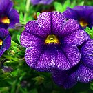 Purple lovers' flower by ♥⊱ B. Randi Bailey
