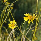 Wildflowers by Bonnie Pelton