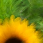 Sunflower in Motion by andymars