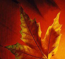 Inferno Leaf by magusmirabilis