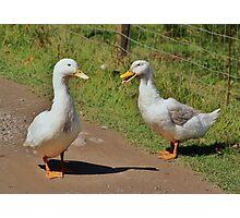 Pair of white quackers. Photographic Print