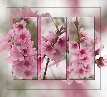 Peach Blossoms by Bonnie T.  Barry