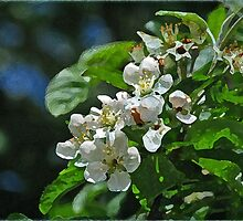 ~ Apple Blossom Time ~ by Brenda Boisvert
