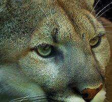 Puma by Cheri  McEachin