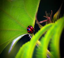 Lady Bug - 2010 by SJRMPhotography