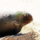 Monk Seal by KFaith