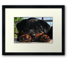 Paws For Thought Framed Print
