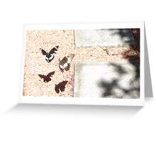 Beaut Butterflies Greeting Card