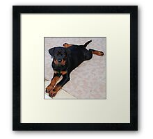 Doggie Fashion Framed Print