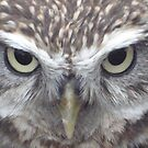 Little Owl by stuart powell