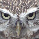 Little Owl by stuart powell