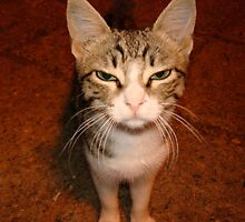 Street Cat by anasophia