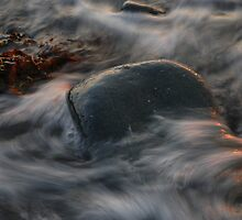 stand against the flow by David Ford Honeybeez photo