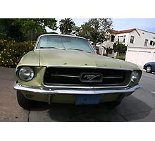 Mustang walk by Photographic Print