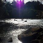 purple sunlight by jcoates