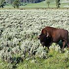 Lamar Valley, Yellowstone NP by Teresa Zieba