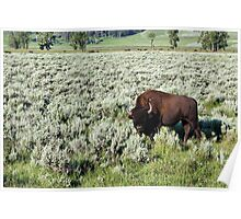 Lamar Valley, Yellowstone NP Poster