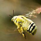 Bumblebee flying by wildshot
