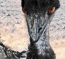 Emu, Dromaius novaehollandiae, in Australia by Julia Harwood
