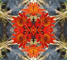 Meta-flora Alignment by spiritahgraphy