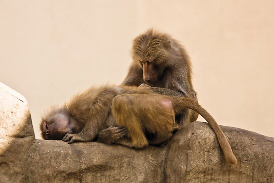 Monkeys by Dominika Aniola