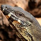 Goanna by footsiephoto