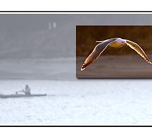Card: Salmon River Gull and Kayaker - Lincoln City, Oregon by USGolfers