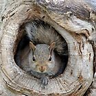 The Agency Finally Sent Over A Squirrel I Could Work With by Gary Fairhead