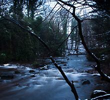 River in woods, Dalkeith Country Park, Scotland by Michael Marten