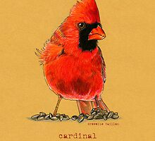 Cardinal in colored pencil  by Revelle Taillon
