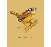 Carolina Wren Bird Photographic Print