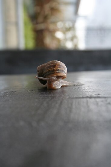 Snail Wall by Sparc_ eg