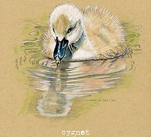 Cygnet, Baby Swan, in colored pencil and pen and ink by Revelle Taillon