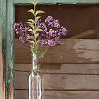 Lilacs and Lambrusco by clckac