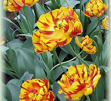 Two-Tone Orange Tulips Vignette by BlueMoonRose