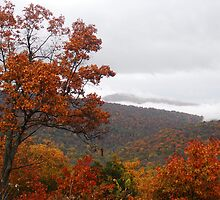 Skyline Drive View by Laurel Haarer