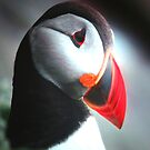 A Puffin Portrait by Pam Moore