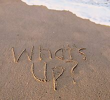 "What's Up card by Lenora ""Slinky"" Regan"
