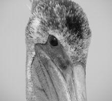 "Pelican Eye by Lenora ""Slinky"" Regan"