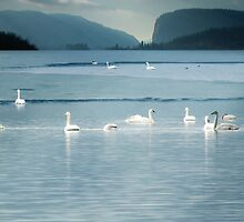 Swan Lake by John Poon