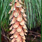 Pine Cone on Tree - Close-up by BlueMoonRose