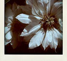 """""""Ce qui reste de tous les voyages est le parfum d'une rose fanée..."""" by Pascale Baud"""