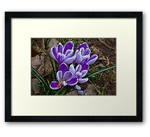 Just Purple (Spring) Framed Print