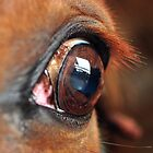 horse head close up II by hebeluna