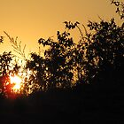 sunset thru&#x27; the bushes by Tridib Ghosh