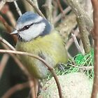 Blue Tit  by amy4vince