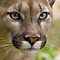 Cuddly But Scary Animals Challenge Winners ~ BigCatPhotos and jammingene